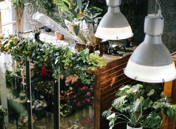Garden Care: What You Need To Consider